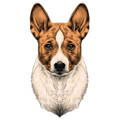 the dog breed Basenji head sketch vector graphics color picture