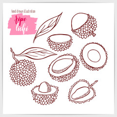 Vector illustration of hand drawn lichi fruit.