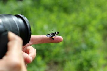 Tierfotograf: Schmetterling im Fokus der Kamera: Weißfleck-Widderchen