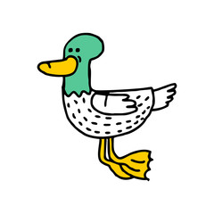 Duck cartoon isolated. Drake drawing. water Bird