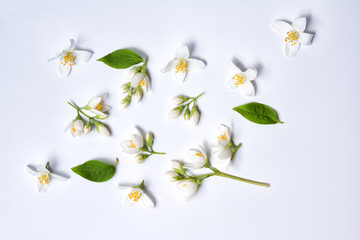 Set of jasmine flowers on white background Wall mural