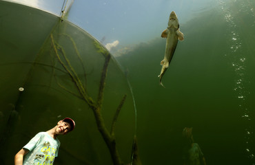"""A child looks at fish as he stands inside an underwater tunnel at the botanical and freshwater exposition """"Live Water"""" in the village of Modra"""