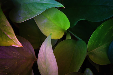 image of tropical leaves dark floral background