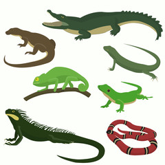 Set of reptiles and amphibians
