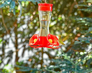 Hummingbird on Hummingbird feeder