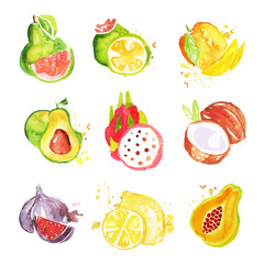 Set of tropical colorful watercolor fruits vector Illustrations