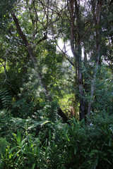 jungle cubaine