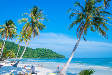 Tropical paradise beach with palm (coconut) tree in Phu Quoc island, Vietnam.