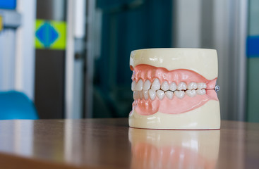 Dental, tooth model, wooden table top. Closeup.