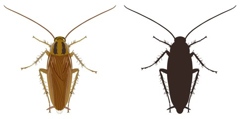 Cockroach icon and silhouette on a white background. Vector illustration.
