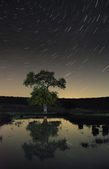 tree and night sky with stars reflection in water, night landscape