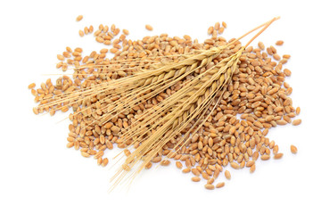 Getreide Ähre