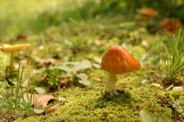 Orange Mushroom on the Forest Floor