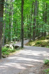 Photography of road in the forest