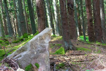 Photography of european forest with big stone in the foreground.