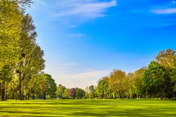 green grass field meadow. landscape panorama
