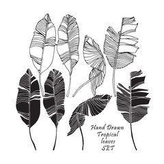 Set of tropical leaves, black silhouettes and outlined images isolated on white background. Vector
