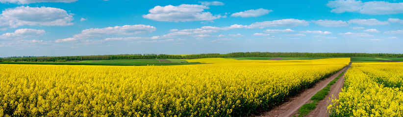 Wall Mural - Dirt Road through Fields of Oilseed Rape in Bloom
