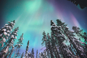 Beautiful picture of massive multicoloured green vibrant Aurora Borealis, Aurora Polaris, also know as Northern Lights in the night sky over winter Lapland, Norway, Scandinavia