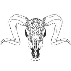 skull-hand drawn illustration