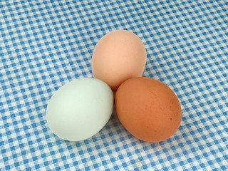 Multicolored Chicken Eggs on a Blue Checkered Tablecloth