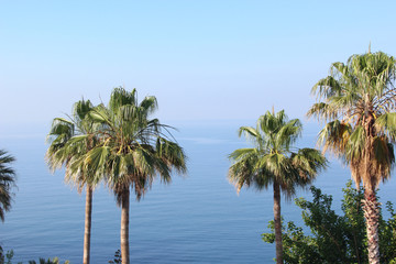The tops of the palm trees against the blue sea with a mountain range on the horizon amid a deep Sunny sky. Morning.