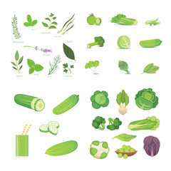 Green vegetables and herbes. Vegeterian Fresh food vector cartoon illustrations.