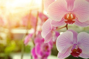 Orchid flower in garden