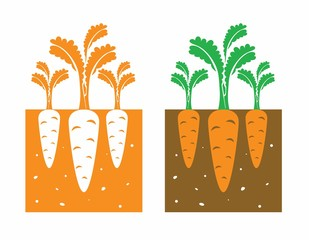 carrot plant with leaves and tubers,vector illustration