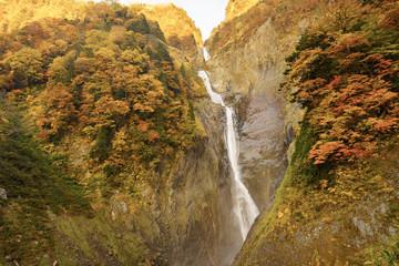 写真の検索: 称名滝,紅葉,風景,...