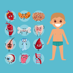 Male body anatomy medical poster with child. Kidney, lung, liver, heart, stomach, uterus, intestine cartoon characters. Internal organs of boy, human body physiology infographic vector illustration.