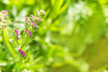 Элемент распускающегося розового соцветия на зеленом размытом фоне.