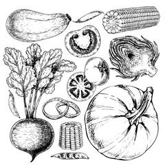 Vector hand drawn set of farm vegetables. Isolated zucchini, betroot, peas, tomato, onion, pumpkin, artichoke, corn. Engraved art.