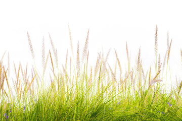 flower green grass fresh spring isolated backgrounds