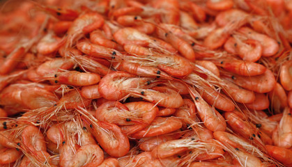 Fresh boiled pink small shrimps close up