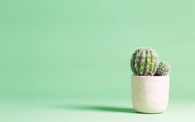 Cactus plant on a pastel green background