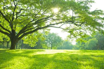 Fotobehang Pistache 公園 木