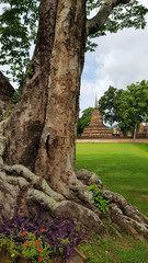 Wat Mahathat Temple in the precinct of Sukhothai Historical Park.