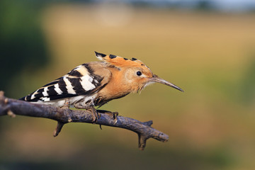 Keep Calm and Carry On,bird is hidden