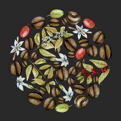Circle illustration from watercolor coffee branches, flowers and beans at different stages of maturation, hand painted isolated on a dark background