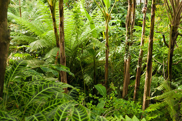 Plants in a tropical ravine rainforest