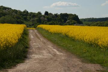 Feldweg im Sommer