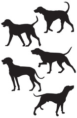 Weimaraner Hunting Dog Breed Silhouettes, vector illustration from Dog Show silhouette series