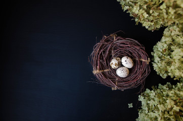 Nest with quail eggs on a black background with hydrangea