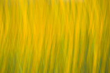 Abstract motion blur colorful flowers on the field