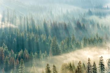 Dreams in Yosemite