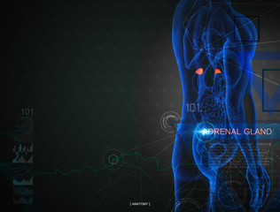 3d illustration of  adrenal gland by X-rays on background