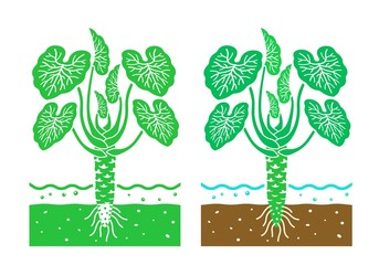 wasabi plant with leaves,vector illustration