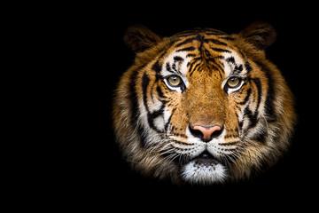 Foto op Canvas Tijger Close up tiger.