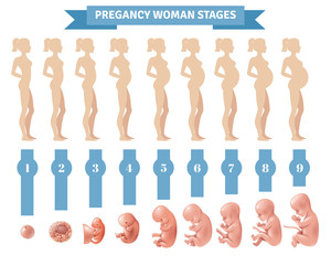 Pregnancy Woman Stages Vector Illustration
